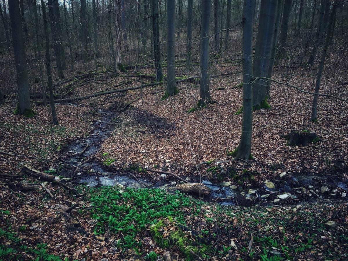 Bach im kahlen Wald