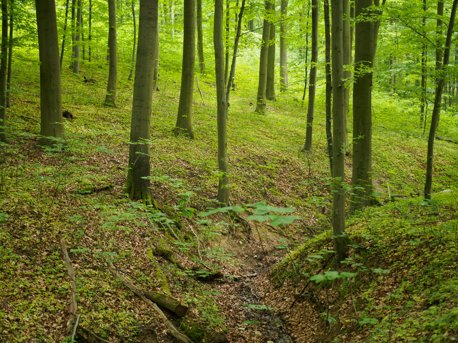 Waldbaden als Corona-Prophylaxe